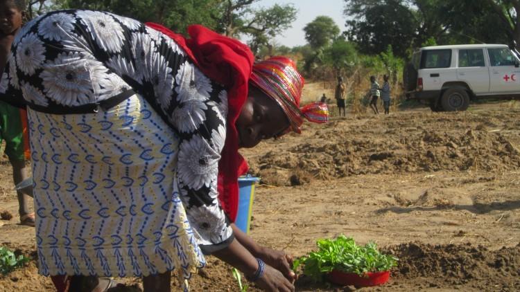 Níger: como o CICV ajudou as pessoas de Diffa em 2015