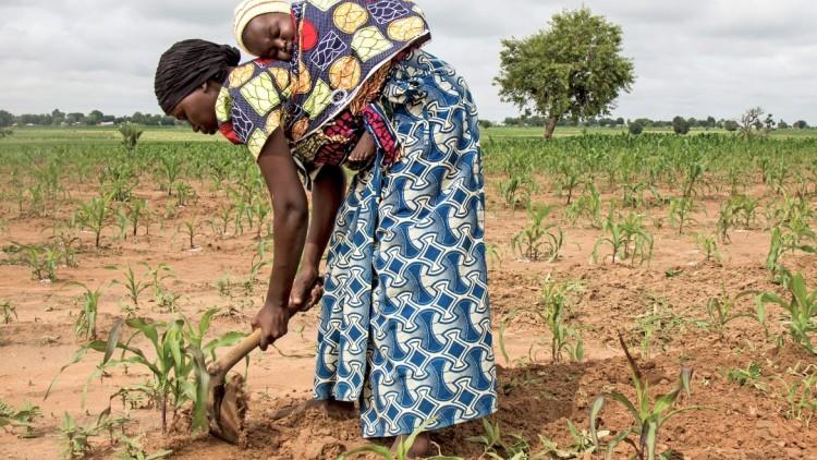 Nigéria: agricultores que voltaram de Camarões semeiam o futuro com ajuda do CICV