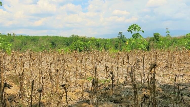 Philippines : distribution de vivres aux paysans du Cotabato-Nord frappés par la sécheresse