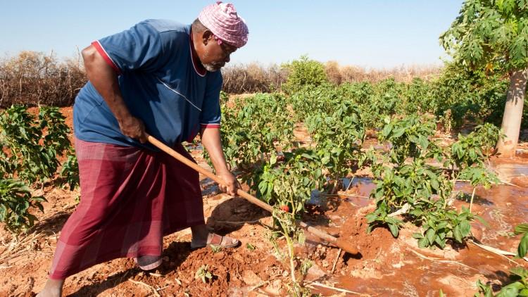 Somalia: Farming cooperatives mean more food for everyone
