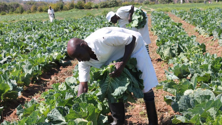 Zimbabwe: Helping prison farm managers cope with the effects of drought