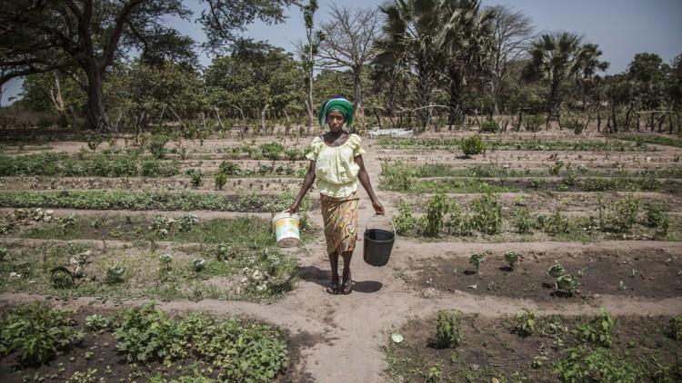 Sénégal : réinstallation progressive des villageois en Casamance