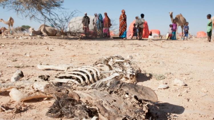 Somália: animais morrem, deixando habitantes em risco com agravamento da seca