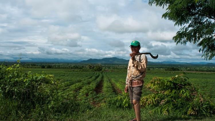 Cambodge : des champs de mines aux champs de riz