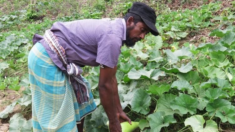 孟加拉国:现金资助项目使人们的生活和生计得到转变