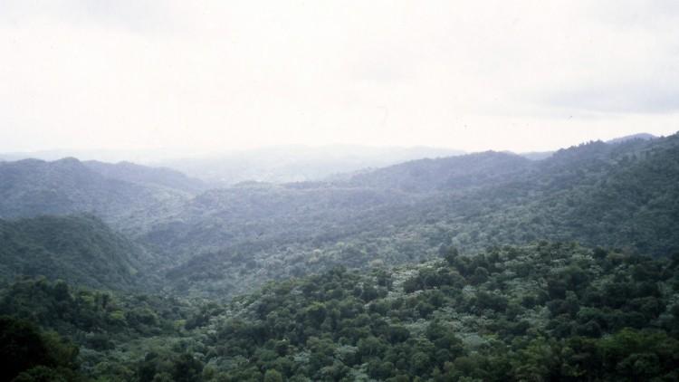 El medio ambiente natural, una víctima olvidada de los conflictos armados