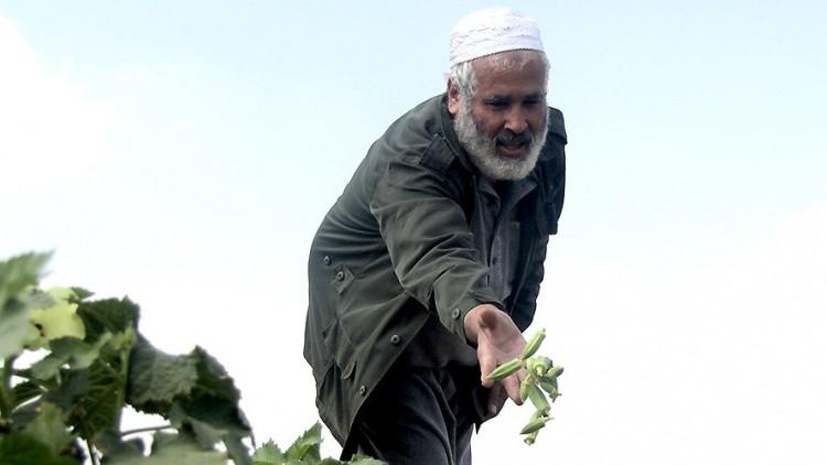 Agricultores em Gaza finalmente conseguem cultivar as suas terras
