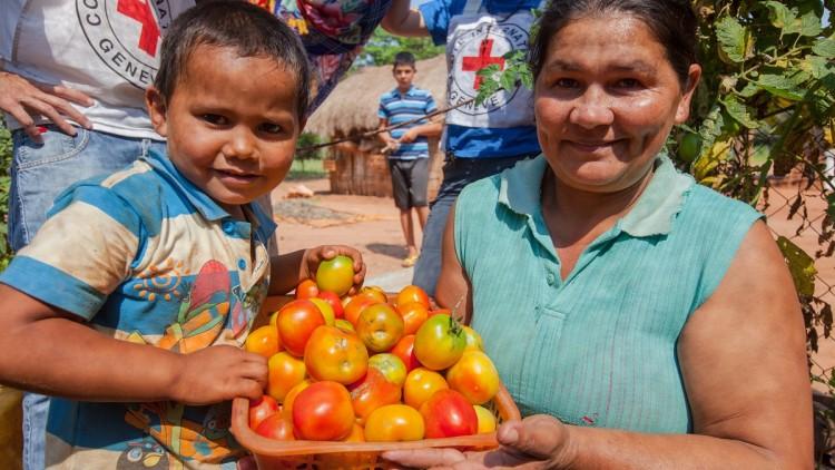 Paraguai: Tempo de colheita