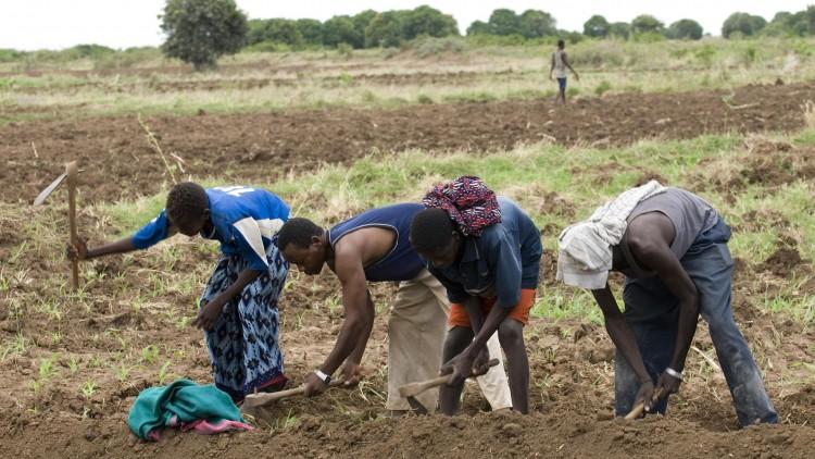 Des coopératives agricoles contre la famine