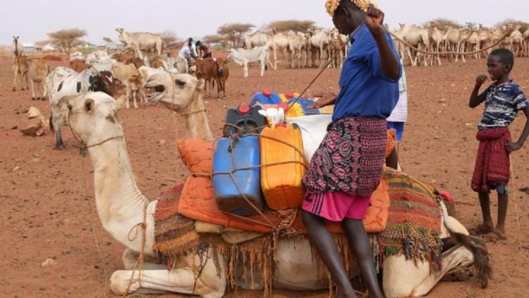 الصومال: تدفق المياه يجذب رعاة الماشية