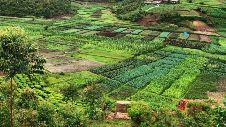 Burundi : des légumes frais pour la santé des détenus malnutris
