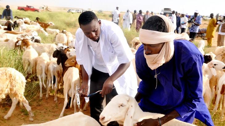 Niger : plus de 2,5 millions d'animaux vaccinés à Diffa, Tillabéry et Tahoua