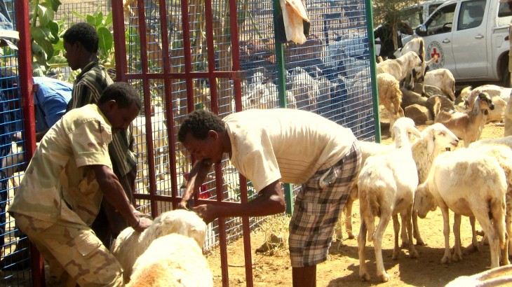 Eritrea: Healthy livestock ensure survival for a village