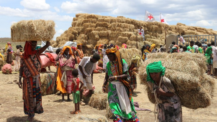 埃塞俄比亚:红十字运送草料以防牲畜死亡