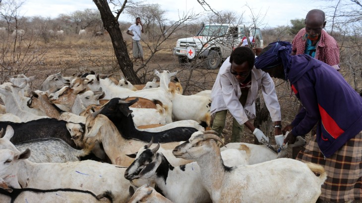 Ethiopia: Injecting new life into pastoral communities through vaccinations