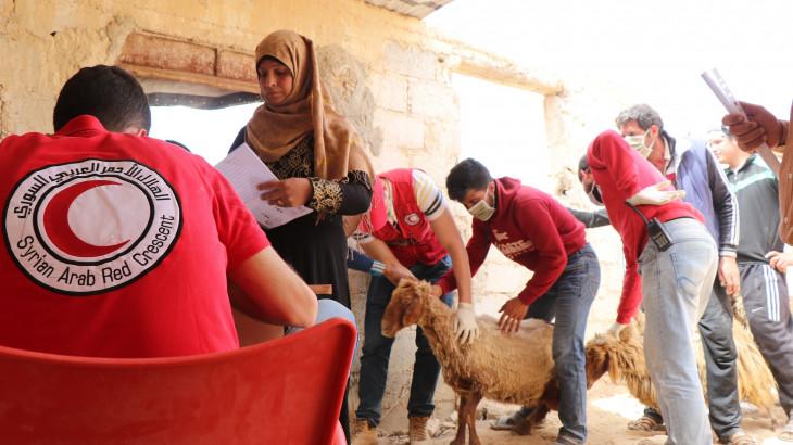 红十字国际委员会:在新冠肺炎疫情期间保护生计,以免引发大规模援助依赖