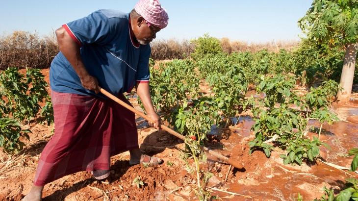 Somalia: Farming cooperatives mean more food for everyone