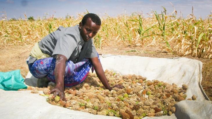 Somália: em busca da autonomia com cooperativas agrícolas