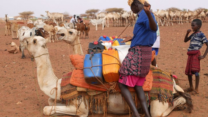 Somalia: Flowing water brings livestock herders together