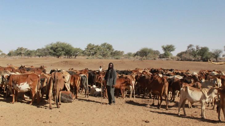 苏丹牲畜养殖者重获希望