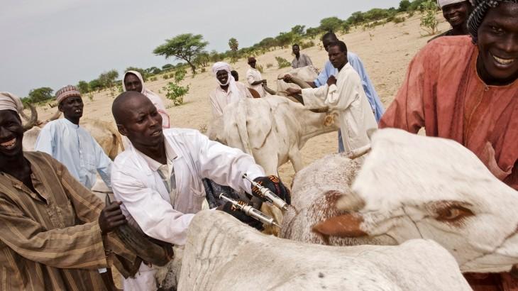 Tchad : en 2017, nous avons vacciné plus de 1 200 000 têtes de bétail au profit de 30 000 ménages