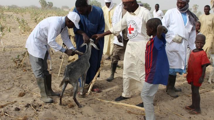 Province du Lac : coup d'envoi de la campagne de vaccination de bétail