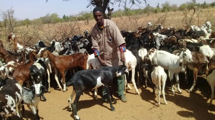 Burkina Faso : 400 000 animaux vaccinés dans la région du Sahel
