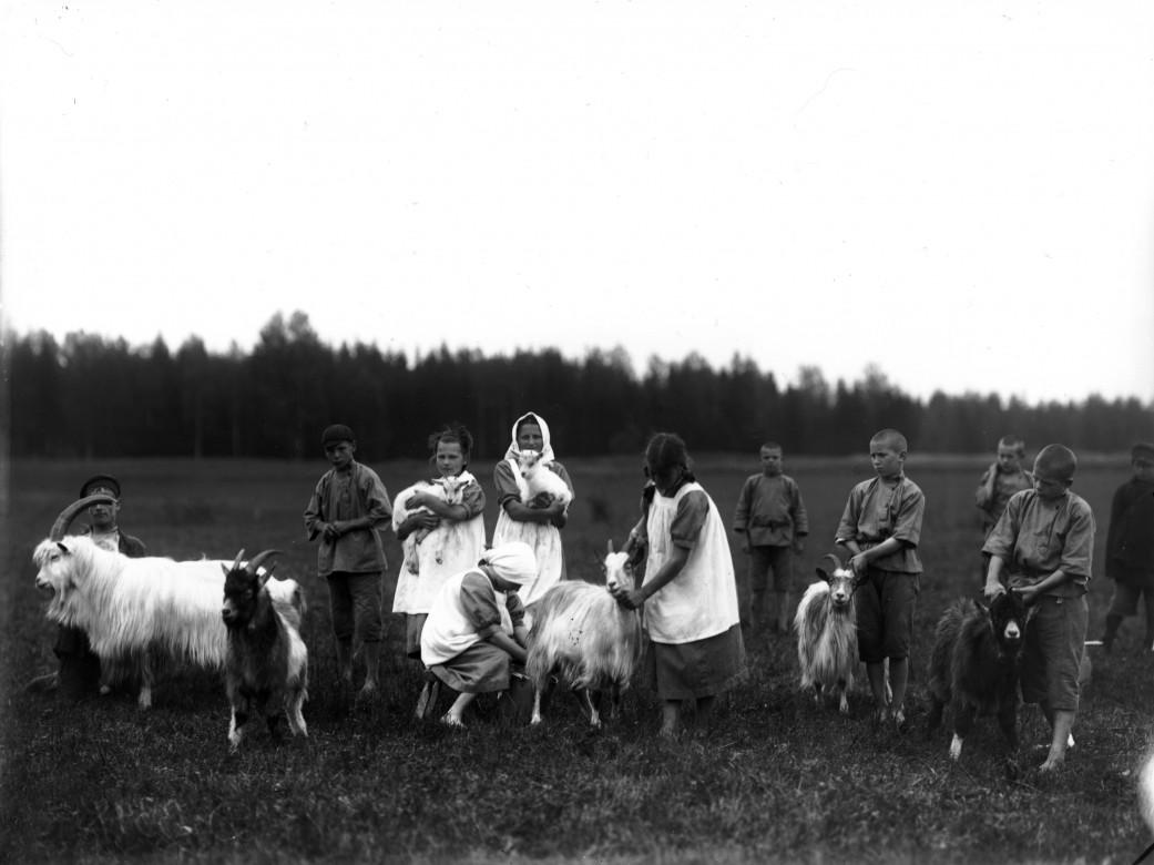 1914年8月,在俄罗斯,诺夫哥罗德省(Novgorod Province)的一家孤儿院里,孤儿们在挤羊奶。