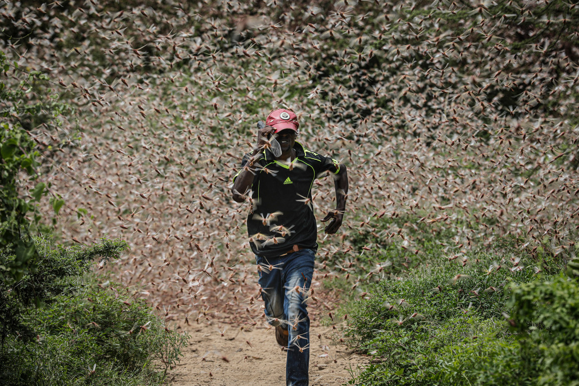 Kenya - Man dashes through a swarm of desert locusts to chase them away in the bush near Enziu, 200km east of Nairobi