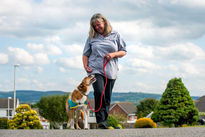 18.00 英国:治疗犬献爱心