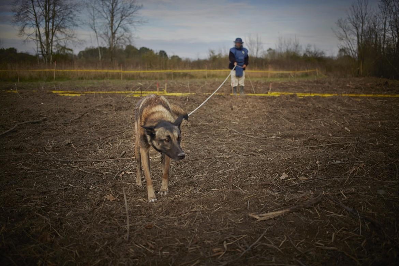 Сапер и его собака работают в рамках программы по разминированию, проводимой фондом Norwegian People's Aid.