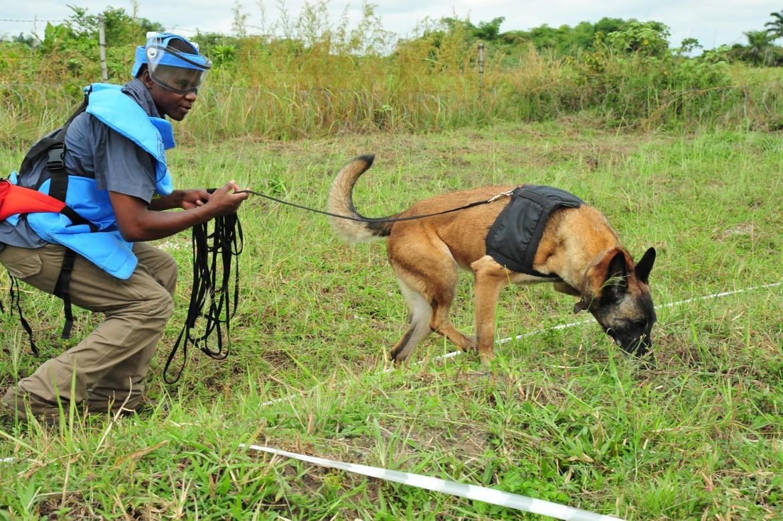 Сапер тренирует собаку перед работами по разминированию.