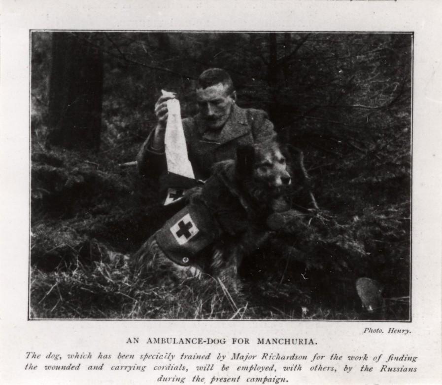 Британская собака-санитар в русской армии.