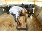 Abu Khaled checks the feed in his barn. Ras Baalbek, Lebanon, July 2015.