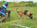 Год Собаки: бок о бок с человеком в любой ситуации
