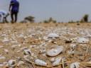 Cuando chocan el conflicto armado y el cambio climático: advertencia del CICR a días de la COP26
