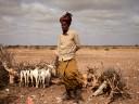 Somalie : « Si vos bêtes meurent, vous mourez avec elles. »