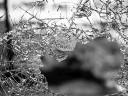 Violencia urbana en América, un fenómeno crónico