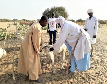Tchad : plus de 384 000 animaux vaccinés