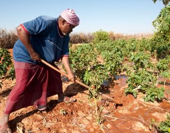 Cooperativas agrícolas en Somalia: más alimentos para todos