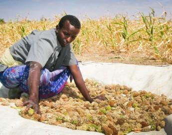 Somalia: Towards self-reliance with farming cooperatives