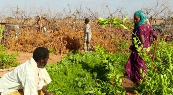 Somalia: Apoyo a las comunidades durante conflictos prolongados