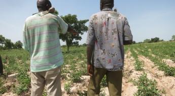 Mali : cultiver la terre en prison