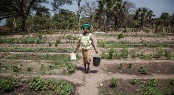 Senegal: poco a poco, los habitantes de Casamance regresan a sus aldeas