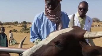 """""""La situation humanitaire au Mali demeure préoccupante"""""""
