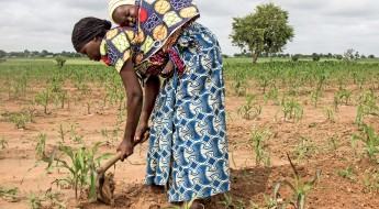Nigeria: Farmers returning from Cameroon sow future, with ICRC seed