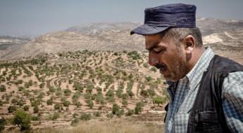 جذورٌ تُقتَلع في غزة والضفة الغربية وعالمٌ يُديرُ ظهره