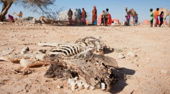 Animals die, putting Somalis at risk as severe drought intensifies