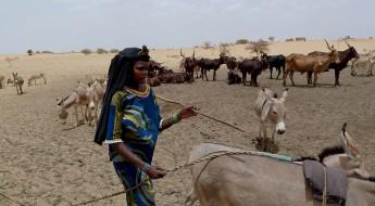 Niger: des banques d'aliments pour sauver le bétail