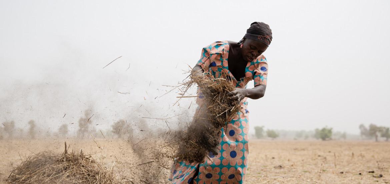 En butte au conflit et au coronavirus dans l'État de Borno au Nigéria